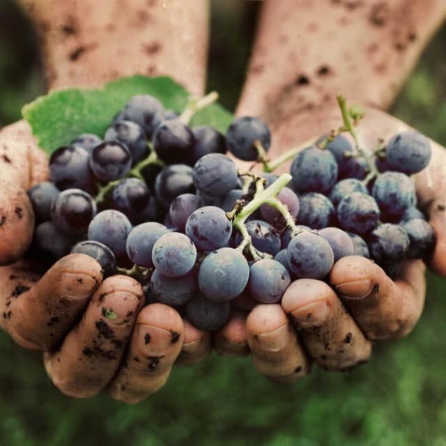 Tour de vinos Ribera del Duero