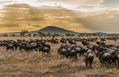 banner-tanzania