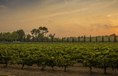 back-web-vinos-penedes